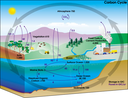 carbon_cycle_diagram.jpg
